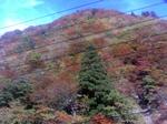 Akita_kouyou