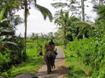 Bali_elephant
