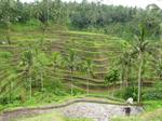 Bali_riceterrace