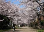 Sakura08_2