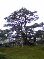Kenrokuen3